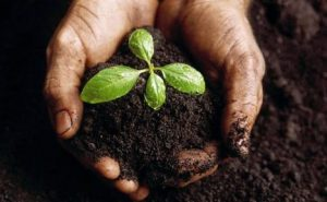 The importance of mineral rich soil for humans